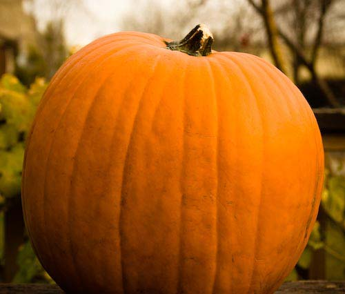 halloween pumpkin recipes