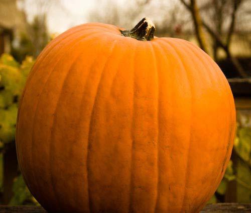 halloween pumpkin recipes